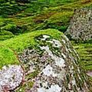 Mossy Rock Garden Poster