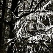 Mossy Trees In Black And White 2 Poster
