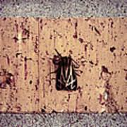 Moth On Brick Poster