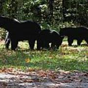 Mother Bear And Three Cubs Poster