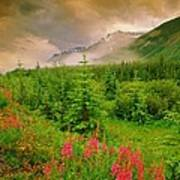 Mount Amery And Fireweed Poster