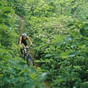 Mountain Biker On Single Track Trail Poster
