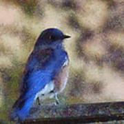 Mountain Bluebird Painterly Poster