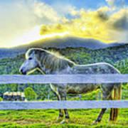 Mountain Pony Poster