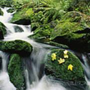 Mountain Stream Cascading Poster