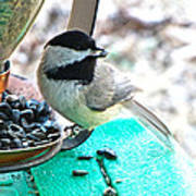 Mouth Full Chickadee Poster