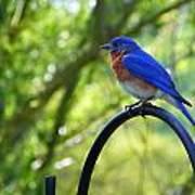 Mr Bluebird Poster