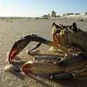 Mr. Crabs Poster
