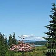 Mt St Helens In The Distance - A Panorama Poster