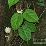 Mushroom Between The Leaves Poster