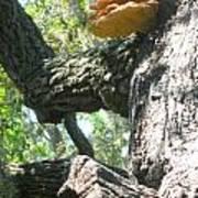 Mushroom Man Poster by Juliana  Blessington
