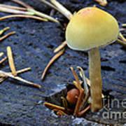 Mushrooms 1 Poster