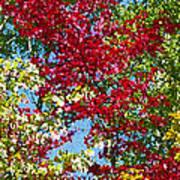 Muskoka Autumn Leaves  Poster