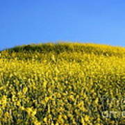 Mustard Grass Poster
