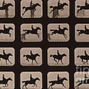 Muybridge Locomotion Horse Leaping Poster