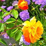 My Beautiful Roses Poster