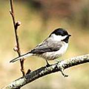 My Little Chickadee Poster