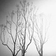 Mystic Trees 1 Poster