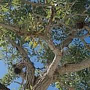 Naples Tree Poster