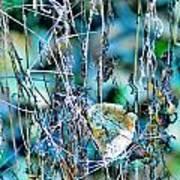 Natural Abstract Poster