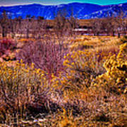 Nature At It's Best In South Platte Park Poster