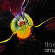 Nature's Amazing Colors - Pansy Poster