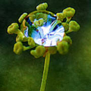 Nature's Diamond Ring Poster