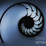Nautilus Slice Poster