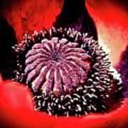 Nebulous Poppy Poster