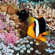 Turning Nemo Poster