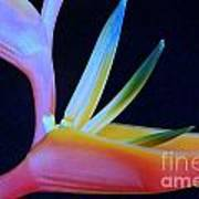 Neon Heliconia Poster