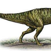 Neovenator Salerii, A Prehistoric Era Poster