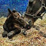 New Born Foal Poster