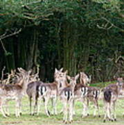 New Forest Deer Poster by Karen Grist