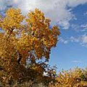 New Mexico Series - Desert Landscape Autumn Poster