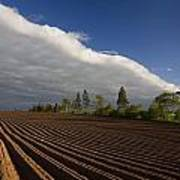 Newly Planted Potato Field And Clouds Poster