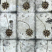 Nine Seed Pods Poster