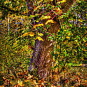 Nisqually Wildlife Refuge P12 The Maple Tree Poster