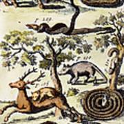 North America: Fauna Poster