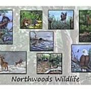 Northwoods Wildlife Poster
