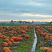 November Pumpkins Poster