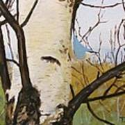 Nuthatch On A Silver Birch 2 Poster