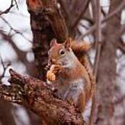 Nutty Squirrel Poster