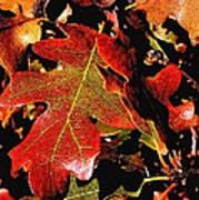 Oak Colors Poster by Darryl Gallegos