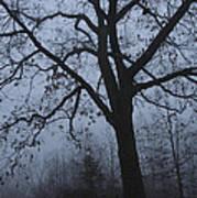 Oak In The Fog Poster