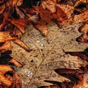 Oak Leaf 1 Poster