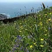 Ocean Wildflowers Poster