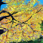 October Fall Foliage Poster