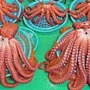 Octopus Attractively Arranged Poster