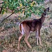 Oh Deer Me Poster by Myrna Migala
